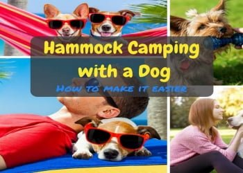 Hammock Camping with a Dog. How to Make It Easier?