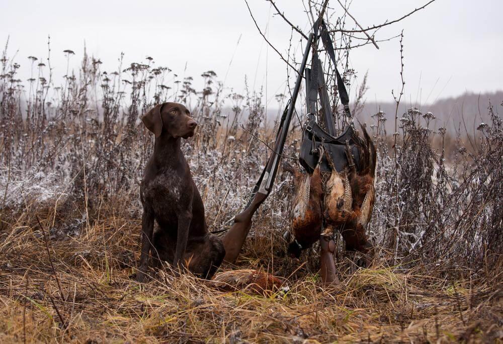 5 Best Shotgun for Squirrel Hunting (Beginners' Ultimate