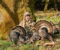 Important Safety Considerations For Wild Turkey Hunting: DOs & DON'Ts