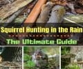 Squirrel Hunting in the Rain: The Ultimate Guide