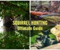 Ultimate Guide for Squirrel Hunting
