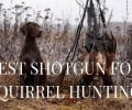 5 Best Shotgun for Squirrel Hunting (Beginners' Ultimate Guide)
