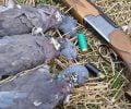 What To Wear For Dove Hunting: Essential Tips For Beginners